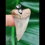 4,4 cm heller Zahn des Isurus hastalis als Anhänger