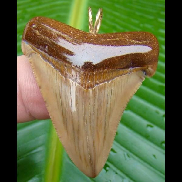 4,9 cm großer Zahn des Carcharocles Angustidens als Anhänger