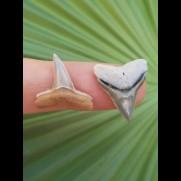 2,0 cm Zahn des Bullenhai und 2,0 cm Zahn des Zitronenhai aus dem Bone Valley