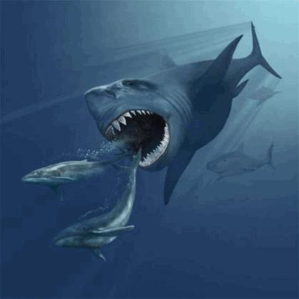 Megalodon Replik Hai Fossil Haizahn
